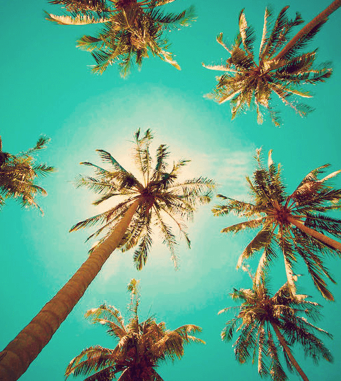 The Beauty Of Having Palm Trees